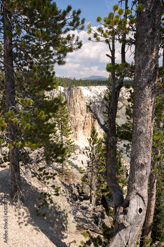 yellowstone river and falls ingrand canyon in Yellowstone National Park in Wyoming - 261080250