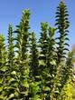 canvas print picture - Blauer Himmel mit Grünpflanzen