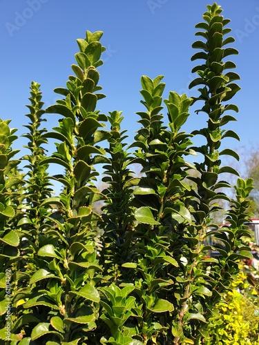 canvas print picture Blauer Himmel mit Grünpflanzen