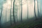 Piękny mglisty światło w magicznym bukowego drzewa lasu krajobrazie.