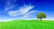 Idyll, panoramic landscape, lonely tree among green fields - 261128470