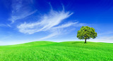 Fototapeta Coffie - Idyll, panoramic landscape, lonely tree among green fields © Trutta