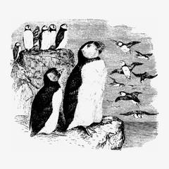 Vintage penguins illustration