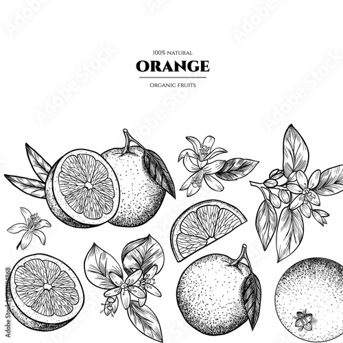 Vector frame with oranges and flowers .Hand drawn. Vintage style - 261194868