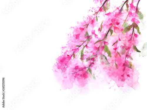 watercolor cherry blossom or sakura. isolated on a white background © atichat