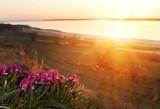 Blooming wild iris flower by the lake. Ukraine. Odessa region.