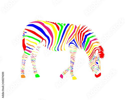 colorful zebra - 261274200