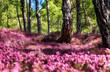 Leinwanddruck Bild - Spring dream