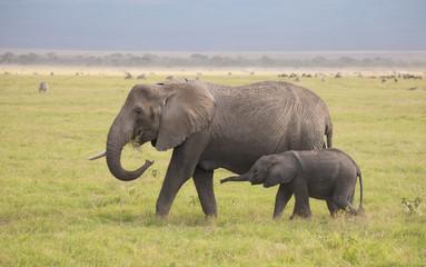 Elefantenmutter und Elefantenbaby - Wildlife in Kenia