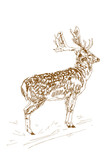 Deer with branchy horns in sketch style. Hand drawn illustration of a beautiful black and white animal.