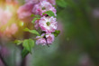 canvas print picture - Blüte im Garten