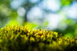 Green moss on nature for background