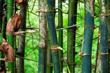 bamboo grove © martina87