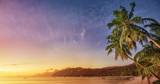 Tropical Palm Tree in the Sunshine - 261329839
