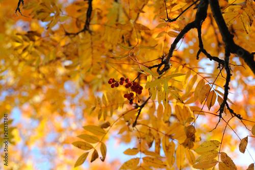fototapeta na ścianę Autumn gold beauty nature wallpaper trees leaves beautiful