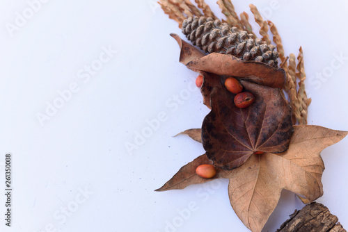 Botanical still life of plants, leaves, and pinecones with berries arranged on a white background. © PhyllisPhotos