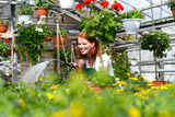 Woman watering flowers in a nursery - Greenhouse with coloured plants for sale