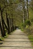 Promenade agréable entre deux rangées d'arbres longeant l'étang du Moulin au domaine de l'abbaye du Rouge-Cloître à Auderghem