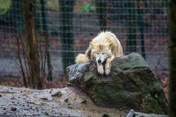Zoo / zu Hause