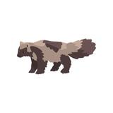 Raccoon dog arctic polar animal vector Illustration on a white background
