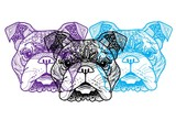 The head of a dog. English bulldog. Drawing manually in vintage style. Meditative coloring. Coloring for children. Arrows, points, patterns.