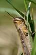 A grasshopper on a grass