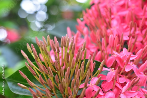 Closeup of pink and red spike flowers - 261456626