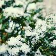 canvas print picture - Frühling Schnee  Winter