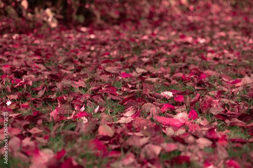 Par-terre de feuilles rouges © Geoffrey