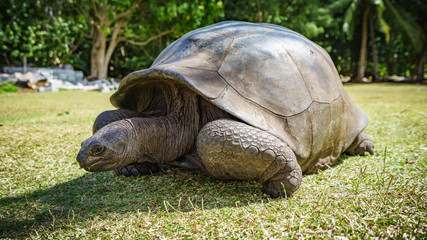 Portrait of a giant tortoise 54