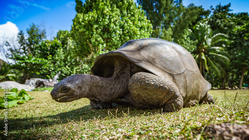 Portrait of a giant tortoise 56