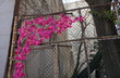 canvas print picture - Guerilla Knitting Blumen