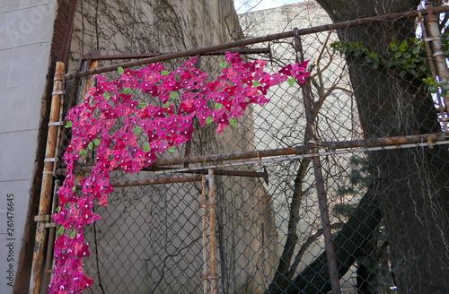canvas print picture Guerilla Knitting Blumen