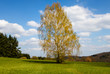 canvas print picture - Blosoming Birch Tree with Clouds and blue sky in the background and green grass in the foreground