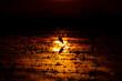 Ardea cinerea backlit over sun reflection on flooded rice field