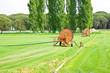 Leinwandbild Motiv Metal irrigator in a green mowed lawn