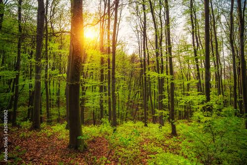 Sunny green spring forest scene