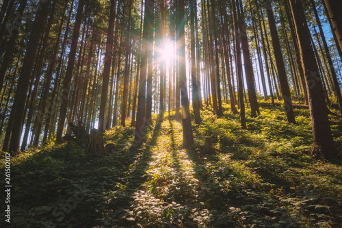 Carpathian forest filled with light