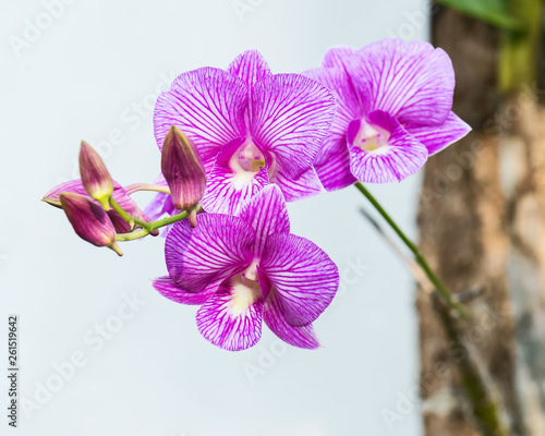 Close up orchids. - 261519642