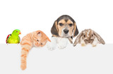 Group of pets  - rabbit,parrot,cat and dog over empty white banner. isolated on white background. Empty space for text