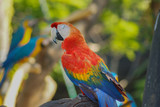 Macaw - beautiful tropical parrots