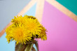 Bouquet of taraxacum dandelion flowers in a glass vase on a colorful background. Copy space