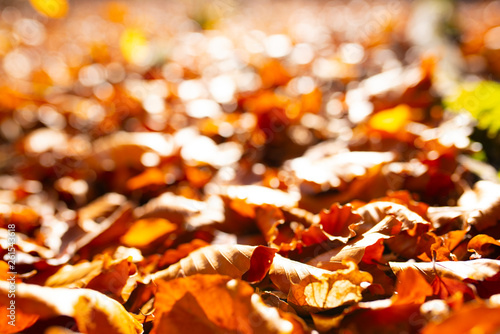 Colorful autumn leaves © gudrun