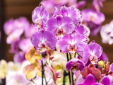High-quality flower of a tropical orchid of phalaenopsis. Set of different shades of different escapes.