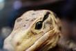 canvas print picture -  Reptile