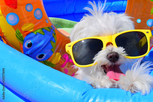 canvas print picture funny dog puppy with sunglasses in the pool