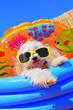 Leinwandbild Motiv funny puppy dog with sunglasses in the pool