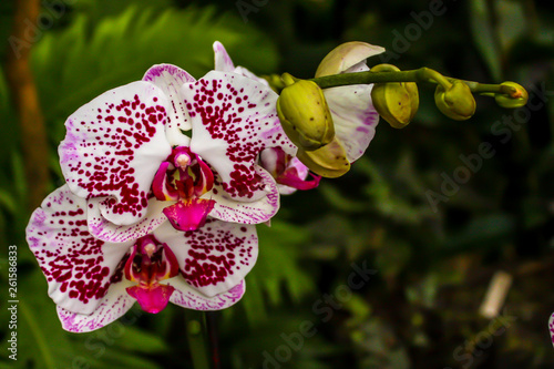 Beautiful orchid - detail on flower - 261586833