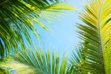 Palm tree as a background. Bali, Indonesia. Travel - image