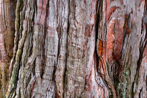 Nahaufnahme von Baumrinde © Dennis